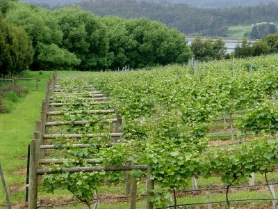 Wineries in the Huon Valley